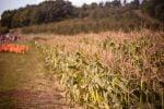 Agricoltura, truffa di 10 mln all'Agea sui fondi europei: 45 misure cautelari tra Enna e Catania
