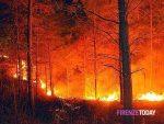 Pensionato messinese in manette: appiccò fuoco in vasta area boschiva