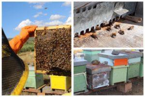 apicoltura siciliana