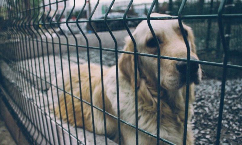 """Alleanza per Paternò 'morde' il sindaco sulla delibera per il ricovero di cani randagi: """"Percorso gratuito era già avviato"""""""