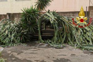 Acireale, 'intrappolati' dentro l'auto da una pianta crollata per il maltempo: Vigili del Fuoco in soccorso