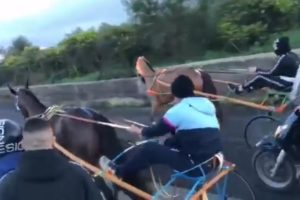 Paternò, corsa clandestina di cavalli con centinaia di spettatori: indagano i Carabinieri (VIDEO)