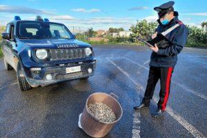 Palagonia, in via Palermo sequestrate 30 kg di telline: denunciato venditore ambulante