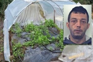 Acireale, coltivava canapa indiana nel giardino di casa: 39enne arrestato in flagranza