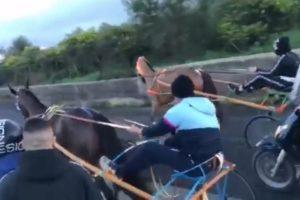 Paternò, denunciati organizzatori e partecipanti della corsa clandestina: il cavallo vincitore era dopato (VIDEO)