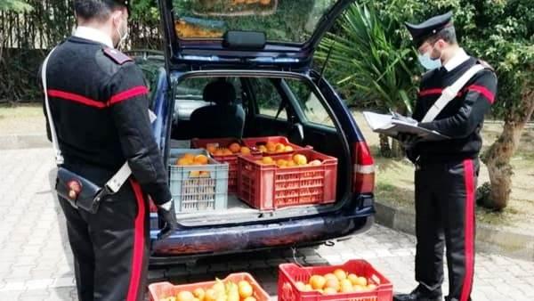 Catania, denunciati due ladri di arance: in auto trasportavano 150 kg di pregiato 'tarocco'