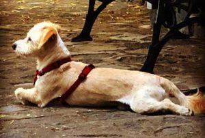 La gatta e il cagnolino: storia buffa ed eterna di due vicini di casa